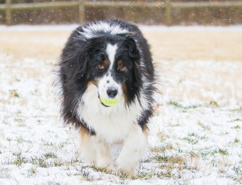 Snowy Tucker