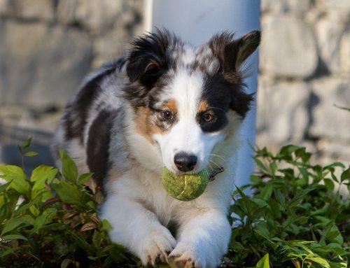 Puppy Cora